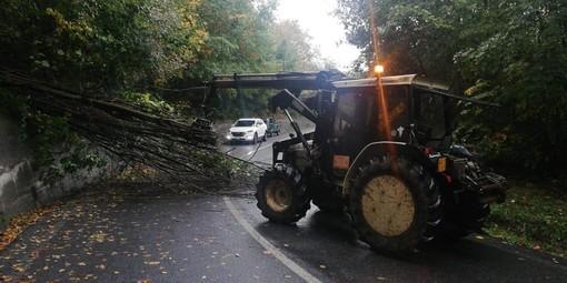 Maltempo: albero crolla sulla Provinciale 11 a Plodio