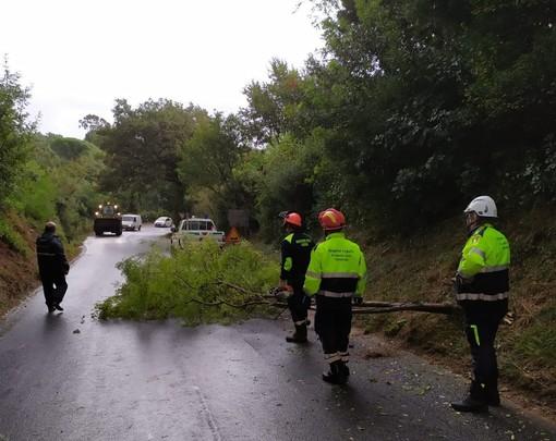 Albero cade sulla strada provinciale tra Campochiesa (Albenga) e Ceriale (FOTO)