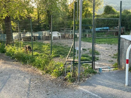 """Savona, la denuncia di Luca Burlando: """"Situazione aree canine insostenibile"""""""