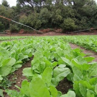 Oltre un milione di euro stanziato per le aziende agricole liguri