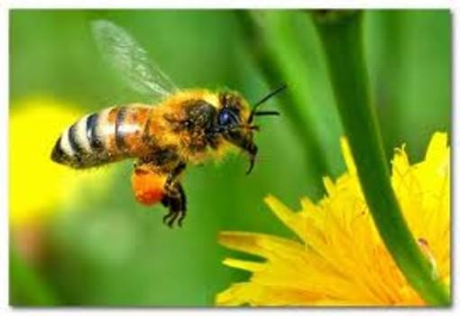 Come diventare apicoltore? Un corso all'Ortofrutticola di Bastia d'Albenga