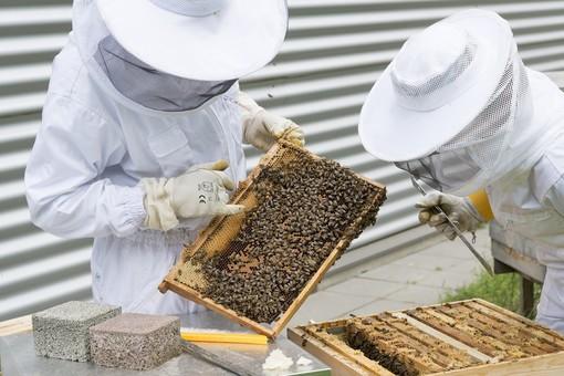 Regione, 76 mila euro per sostenere l'apicoltura