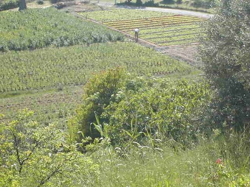A Garlenda quattro giorni dedicati all'agricoltura