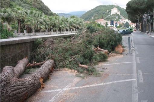 Finale Ligure interviene sul patrimonio arboreo