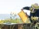 Rialto, un incontro di apicoltori per esaminare il problema della riduzione degli insetti impollinatori