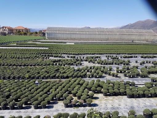 Psr investimenti: nuove risorse sono una buona notizia per le imprese agricole