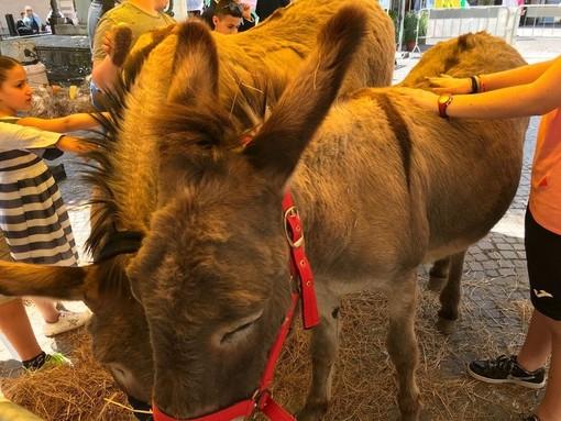 Pietra Ligure, domenica 27 gennaio la festa della benedizione degli animali