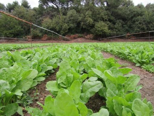 Apre ad Albenga lo sportello dell'agricoltura