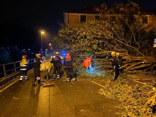 Finalborgo, cede un grosso albero in Piazza Monsignor Mantero: nessun ferito (FOTO)