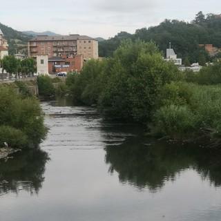 """Lettera al direttore: """"Gli alberi così alti nel fiume Bormida sono pericolosi"""""""