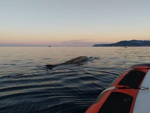 """Foto pagina Facebook associazione """"Menkab: il respiro del mare"""""""