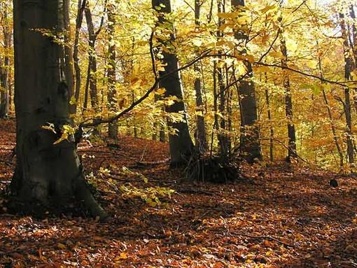 Cadavere ritrovato nei boschi di Magliolo: indagini in corso