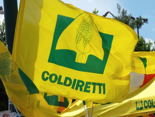 """Recovery Plan, Coldiretti: """"Accolte sollecitazioni per svolta green"""""""