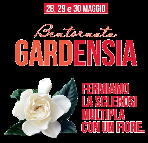 Giornata Mondiale della Sclerosi Multipla, in piazza Rocca a Loano in vendita le Gardenie di Aism