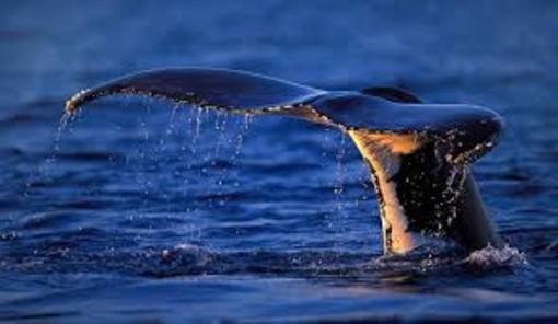"""""""Io Vado...con le balene"""": un pomeriggio di laboratori per giovani artisti e scienziati"""