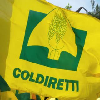 """Export cibo italiano in crescita, Coldiretti: """"Strategici progetti sull'agroalimentare"""""""