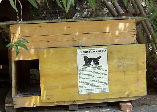 Albenga, cani liberi sterminano tre gatti: è caccia al proprietario