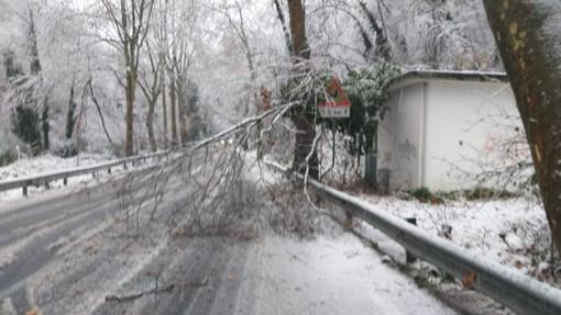 Savona, caduta alberi sulla Sp29: chiuso il Cadibona (FOTO)