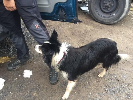 Donna ritrovata viva a Cisano sul Neva: oggi l'ultima missione del cane pompiere 'Canada'