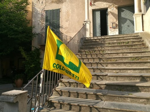 """UE, Coldiretti: """"Etichetta a semaforo boccia l'olio extravergine d'oliva assieme all'85% dei prodotti made in Italy"""""""