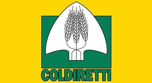 """Disoccupazione, Coldiretti: """"L'agricoltura è una risposta per i giovani"""""""