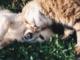 L'Enpa di Savona organizza la Pizzata pro animali