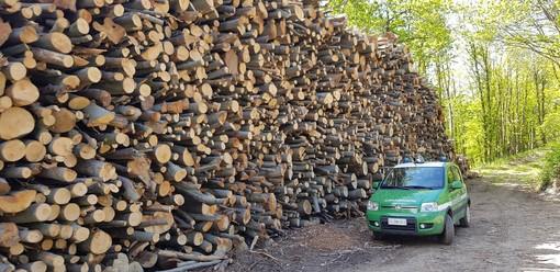 Val Bormida, controllo dei boschi da parte dei Carabinieri Forestali: rilevati tagli mal eseguiti ed irregolarità nella viabilità forestale