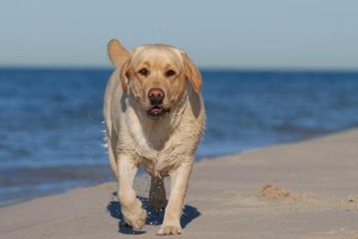 Spiagge e bandiere blu, ma quando l'accesso ai cani a Savona?