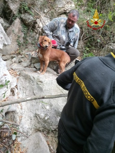 Alassio: due cani da caccia si infilano tra le rocce e non ne escono più. Salvati dai vigili del fuoco