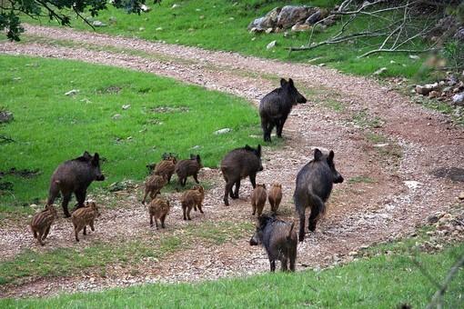 "Danni da fauna selvatica, Confagricoltura Liguria: ""Strumenti finora inadeguati"""