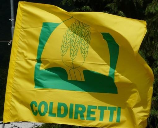 """Coronavirus, Coldiretti: """"Dai campi alla tavola, il 50% delle imprese aperte lavora per garantire cibo"""""""