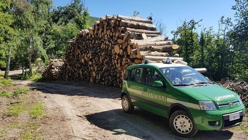 Controlli antibracconaggio: i carabinieri forestali sequestrano dei lacci e una tagliola nel Finalese