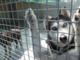 Alassio, l'Accademia Kronos e il Comune aiutano un giovane cane malato di tumore