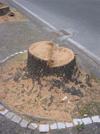 Il WWF chiede le carte delle autorizzazioni al taglio degli alberi ad alto fusto