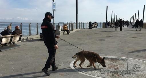 Alassio, controlli dei carabinieri con i cani del nucleo cinofili di Villanova d'Albenga (FOTO)