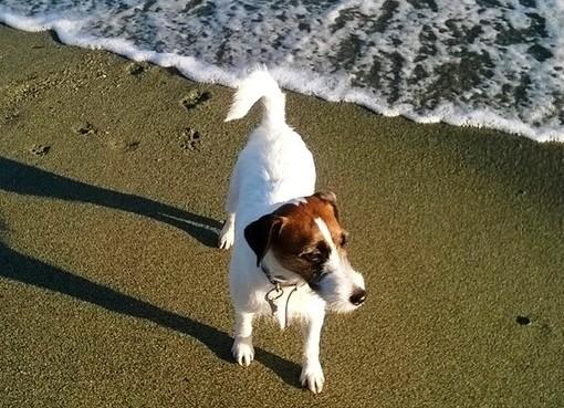 """Savona, la proposta di Maria Maione: """"Spiaggia del prolungamento: un angolo anche per i nostri fedeli amici a 4 zampe"""""""