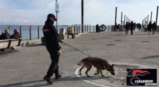 Controlli dei carabinieri nel savonese, 10 le sanzioni per le violazioni delle norme anti Covid