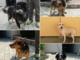 Alassio, al via campagna di adozione per i cani ritrovati a vagare sul territorio comunale