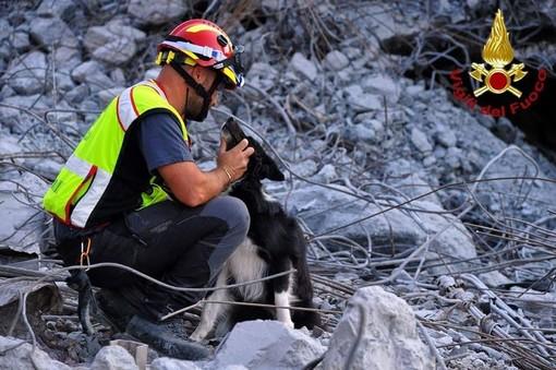 """Camogli: consegnati i premi """"Fedeltà del Cane"""" ai cani dei Vigili del Fuoco che hanno operato sul Ponte Morandi"""