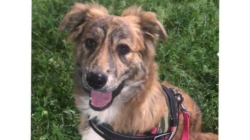 Savona, cagnolina smarrita in Piazza del Popolo: l'appello dei proprietari