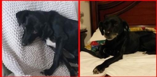 Una storia a lieto fine per Emily: la cagnolina è stata ritrovata nel quartiere savonese di Lavagnola
