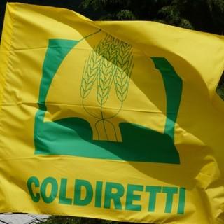 """Pasqua, Coldiretti: """"Solidarietà alimentare per le famiglie in difficoltà"""""""