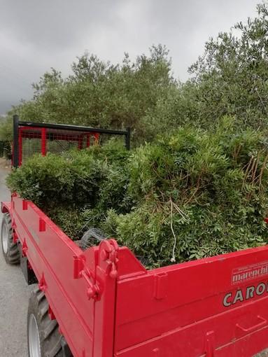 Trafugavano piante protette di Euforbia a Tovo San Giacomo. Fermati dai Carabinieri Forestali