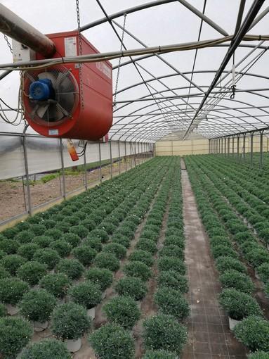 Nuovo slancio per il florovivaismo ingauno con la filiera delle piante in vaso