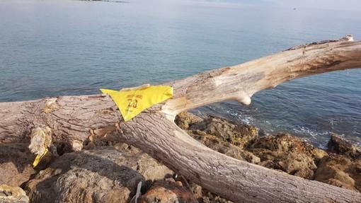 Albenga, la Fionda diventa mitologica: l'iniziativa dei Fieui di Caruggi spopola su Facebook
