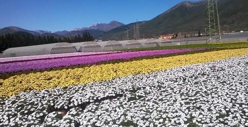 Floricoltori truffati 4 anni fa, arriva la beffa: ricevono un avviso di pagamento dall'Agenzia delle Entrate