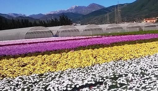 """""""Ripartiamo con un fiore a sostegno del florovivaismo italiano"""""""