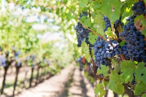 Nasce a Ortovero il miglior vino spumante d'Italia secondo Paolo Massobrio e Marco Gatti
