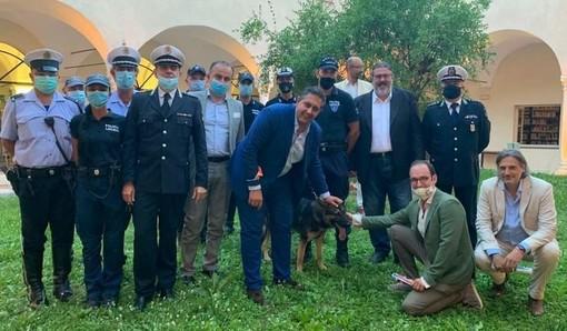 """""""Lupo"""", il cane antidroga dell'Associazione delle Polizie Locali 'Riviera di Ponente'. Vaccarezza: """"Un passo avanti nelle attività legate alla sicurezza e al benessere della popolazione"""""""