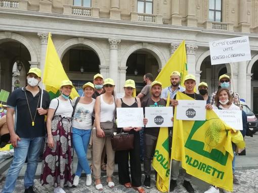 """Covid, Coldiretti: """"70 mila cinghiali assediano la Liguria"""""""